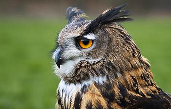 Durham Falconry